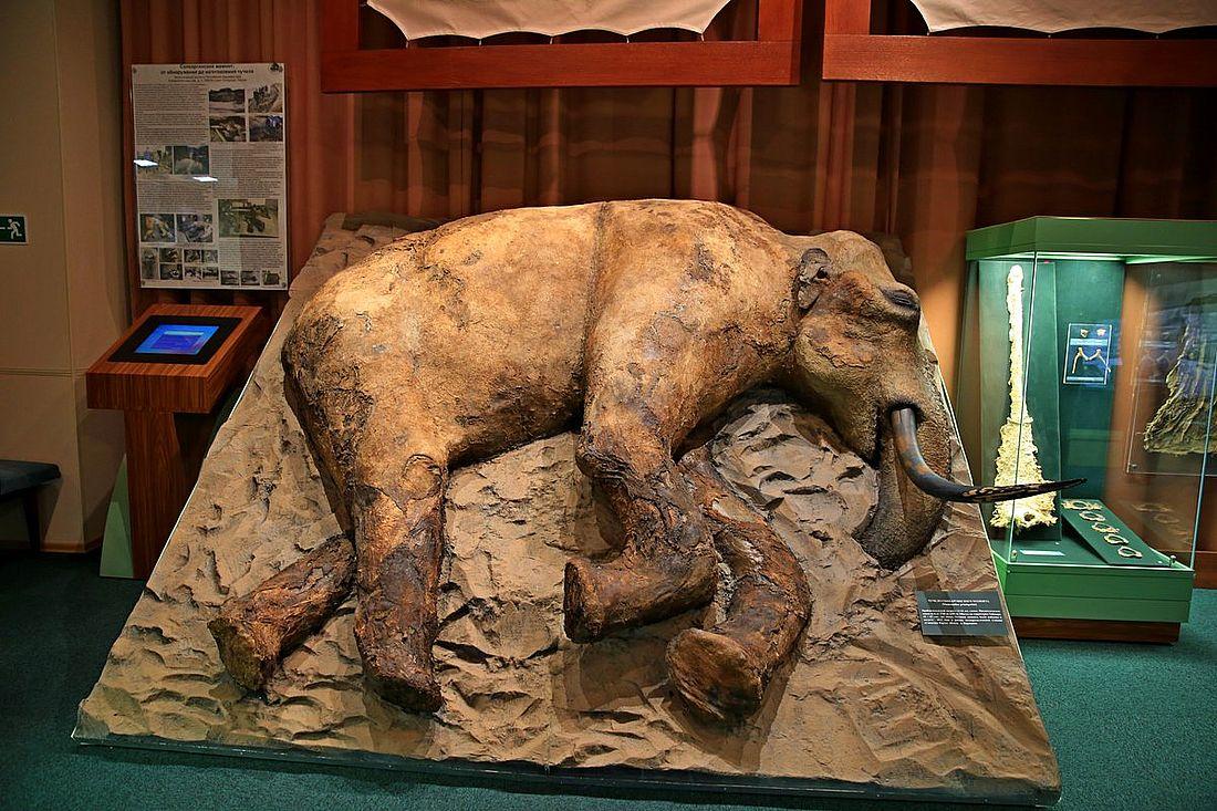 Сопкаргинского мамонта нашли у мыса Сопочная Карга