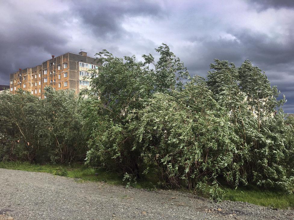 В Норильске из-за штормового предупреждения школьники остались дома