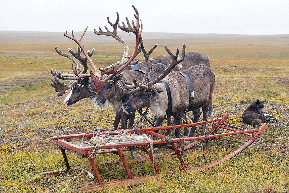 Сельскохозяйственная перепись на севере края началась с Дудинки