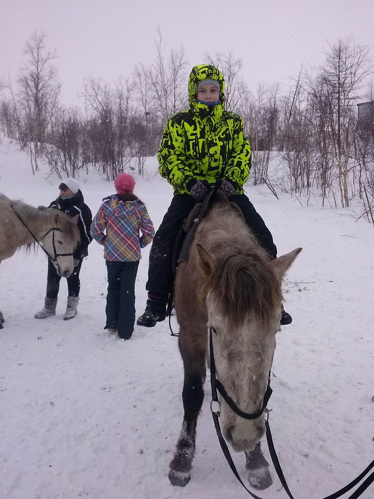 Сельскохозяйственный эксперимент по организации самого северного в мире табунного коневодства проводится в Норильске