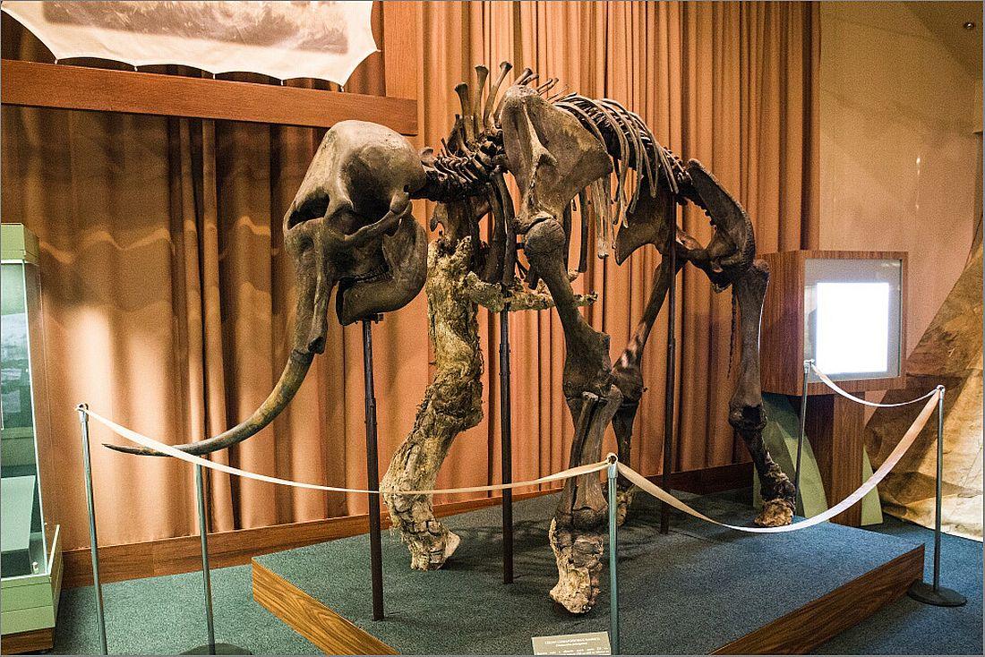 Скелет мамонта Жени
