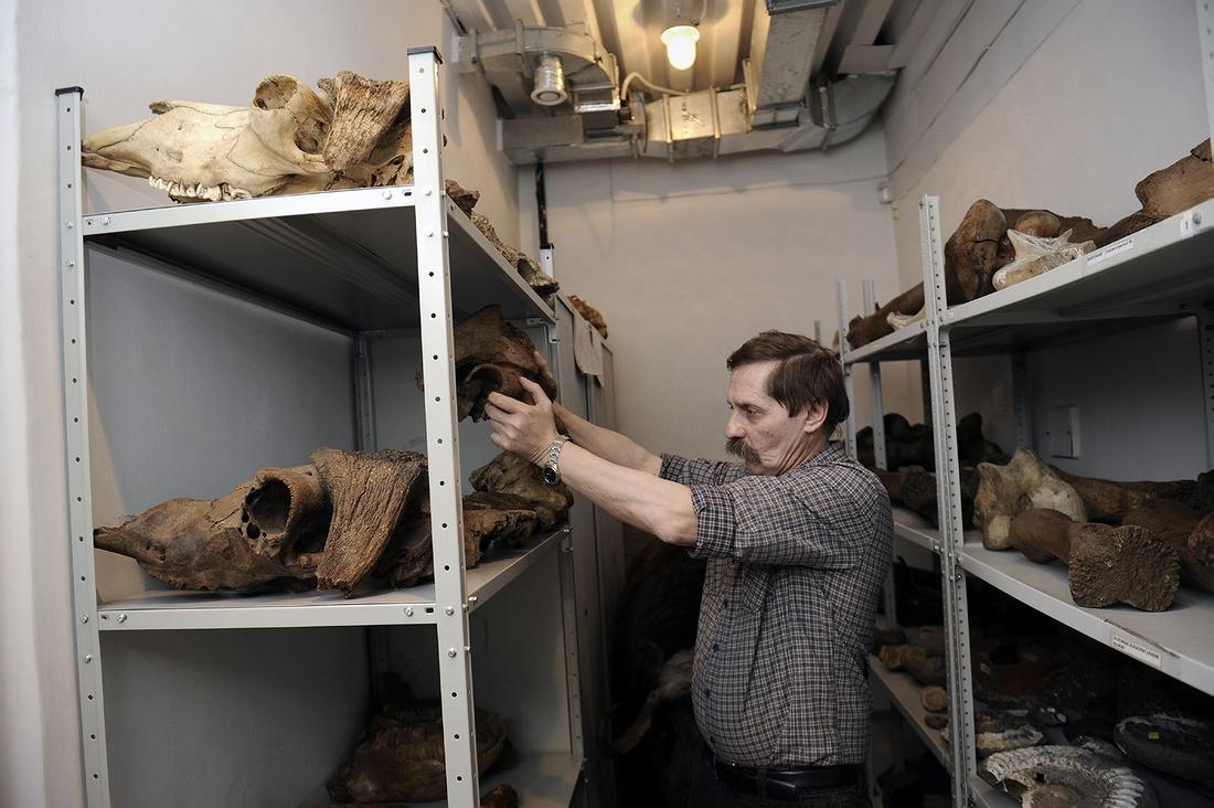 В палеонтологическом хранилище музея
