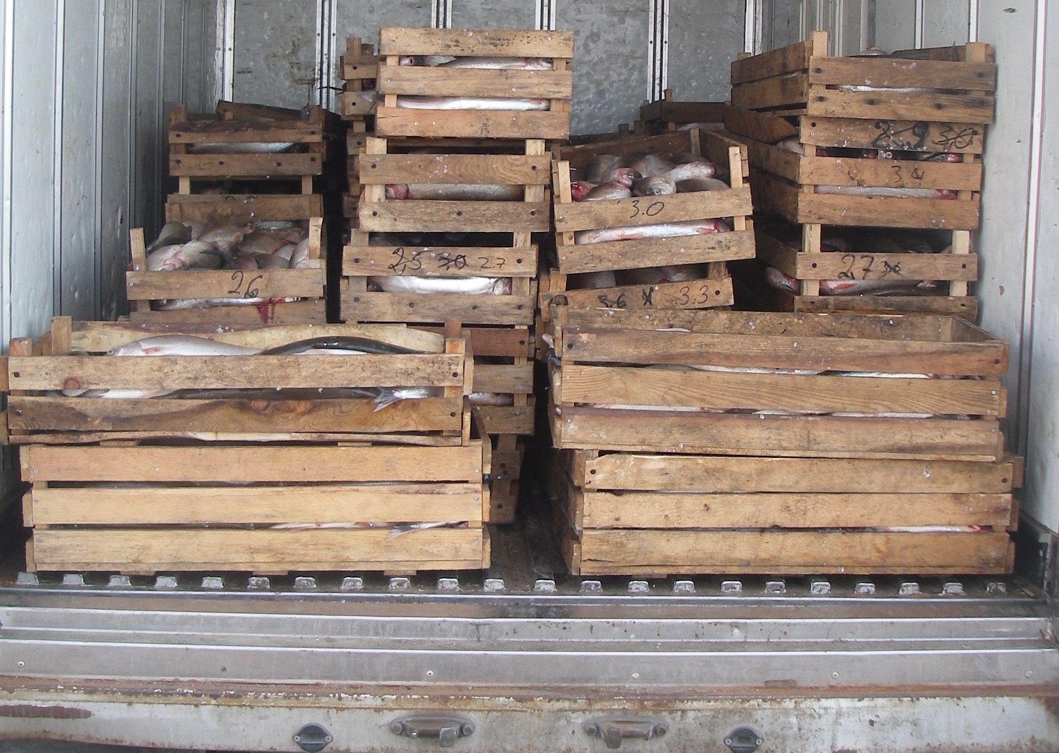 Факты транспортировки северной рыбы и бразильской свинины с нарушениями выявили в рамках рейда в Норильске