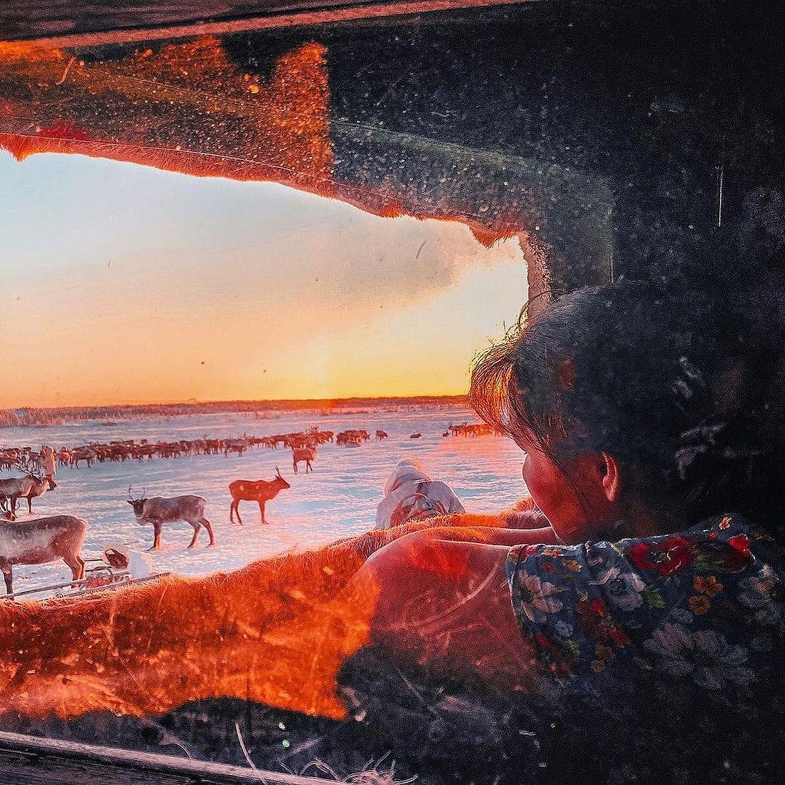 Кроме традиционных чумов зимой оленеводы живут и в перевозных балках-вагончиках