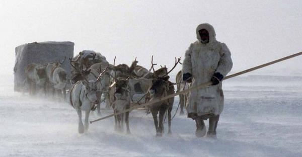 Во время празднования Дня оленевода жители тундры пройдут медицинское обследование