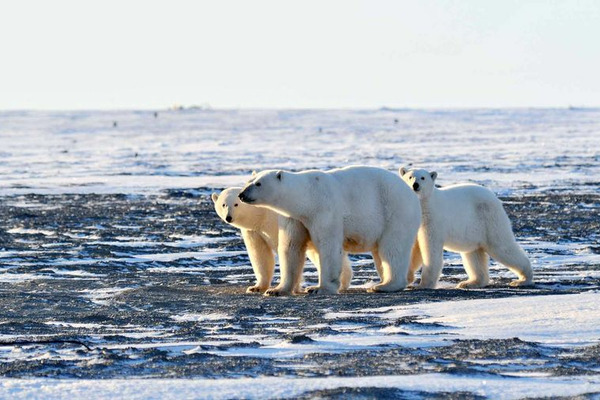Красноярский край и Санкт-Петербург подписали допсоглашение по Арктике