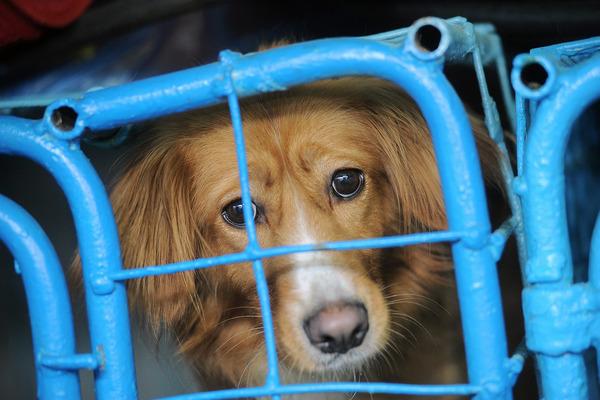 Питомцы сгоревшего в Норильске приюта для животных проходят лечение.