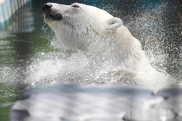 Медведице Марфе подарили высокотехнологичную льдину