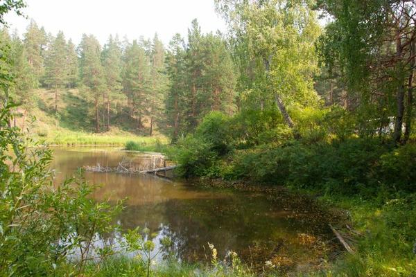 Объемы восстановления лесов увеличат в крае