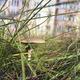 В Норильске на газоне выросли грибы