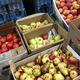 В Норильске уничтожили тонну немаркированных овощей и фруктов