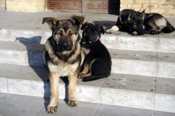Норильская прокуратура проверила сообщения СМИ о жестоком обращении с животными