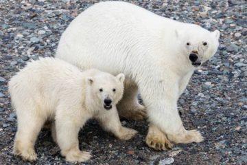 Медвежонку и совенку тоже нужна забота