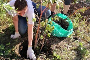Норильские школьники озеленяют город