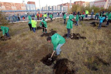 На стадионе «Заполярник» в Норильске высадят ивы