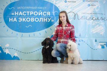 В Норильске прошел фестиваль для собаководов