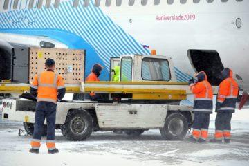 Белый медведь с Диксона приземлился сегодня в норильском аэропорту