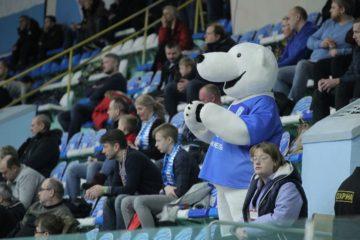 Норильчанам предлагают придумать имена для двух белых медведей – символов МФК «Норильский никель»