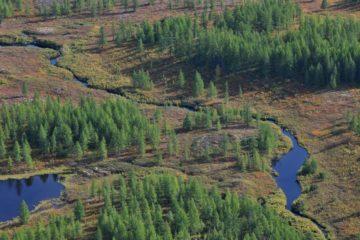 Ученые изучают, как потепление климата влияет на флору Таймыра