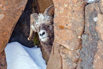 Животные в природных заповедниках получили передышку от туристов