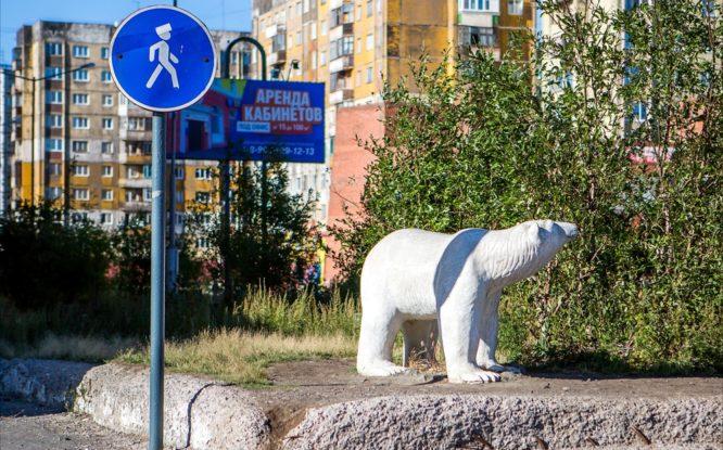 Жизнь и судьба медведицы Айки