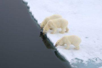 Рекордный минимум льда зафиксировали в Арктике