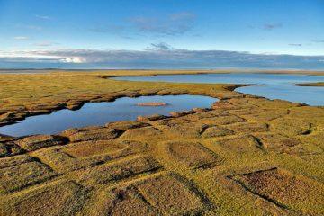 Таймырские ученые провели экологический мониторинг заповедного Пясинского участка