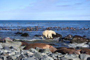Площадь льдов в Беринговом море сократилась до минимума