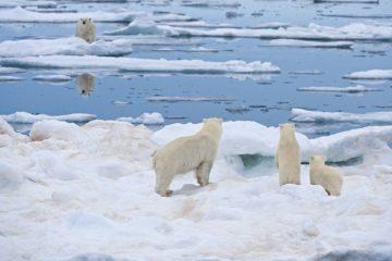 Ученые опасаются полного таяния арктических льдов