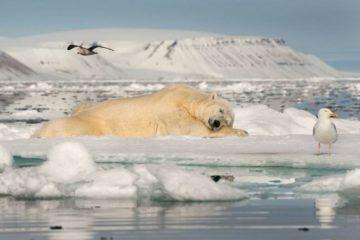 Ученые мира объединились для изучения арктических животных