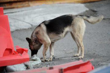 На отлов и содержание бездомных животных в Норильске потратят более 16 миллионов