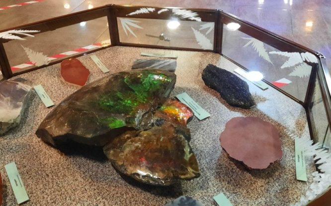 На Таймыре до сих пор находят головоногих моллюсков из мезозойской эры
