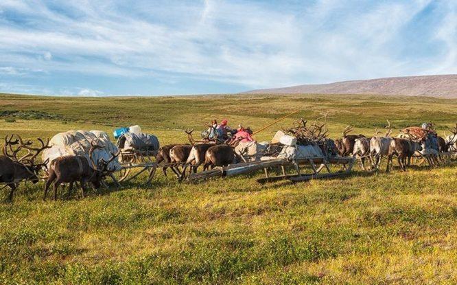 Российские долганы и ненцы предложили Арктическому совету свой вариант восстановления тундры