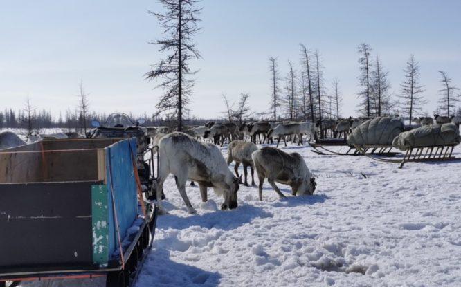 Григорий Дюкарев: «Мы на этапе создания правил проживания в Арктике»