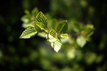 «У зеленых технологий есть все шансы стать двигателем прогресса»