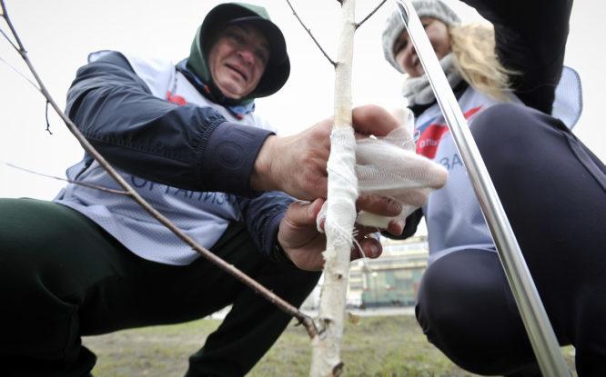 В парке «Озеро Долгое» волонтеры подлечили сломанные деревья