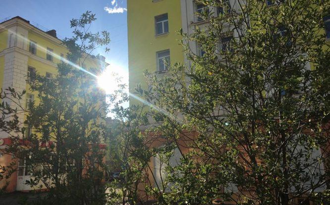 Охрану окружающей среды в Норильске выделили в отдельную городскую программу