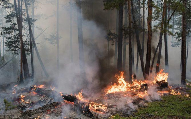 Лесные пожары могут ускорить глобальное потепление