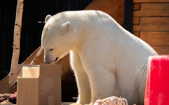 Фильм о медведице из Норильска получил награду международного кинофестиваля