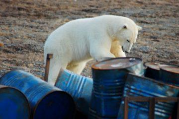 Ученые проверят Арктику на радиоактивность