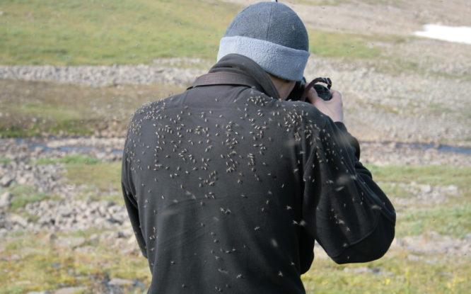 Роспотребнадзор предупредил о распространении осенью опасных комаров