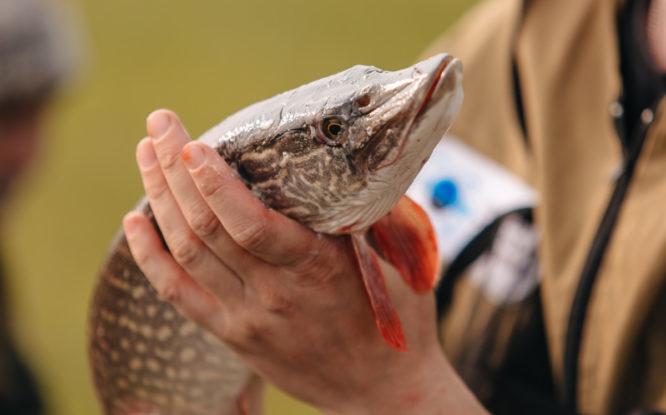 Ученые не нашли ущерба рыбному хозяйству в верховьях Пясины