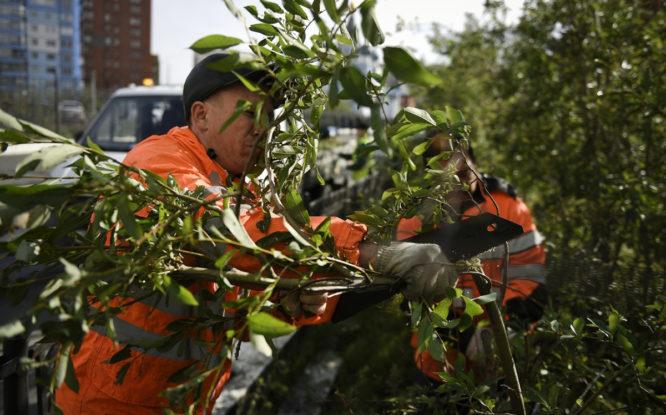 На улицах Норильска обрезают ветки у кустарников