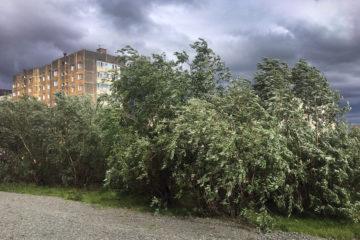 В Норильске объявили штормовое предупреждение