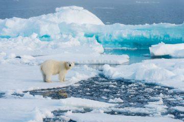 В Арктике и Антарктике стремительно увеличивается площадь морского льда