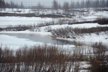 Сибирь и Арктика «теплеют» в четыре раза быстрее других регионов